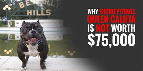Debate: Why Micro Pitbull Queen Califia Is Not Worth $75,000