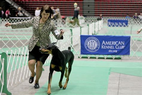 Photos: American Kennel Club Dog Show | Daily Chronicle