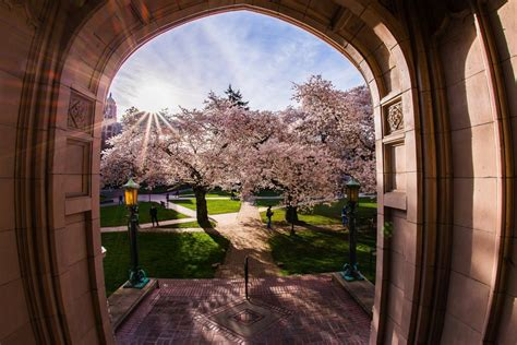 Reader's Lens | Drone view of UW cherry blossoms wins